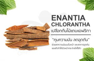 Enantia Chlorantha Extract